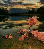 Sundawn in dem See mit Blättern lizenzfreie stockbilder