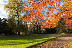 Sunday Afternoon in Autumn. In a quite park in Zurich on a sunny Sunday afternoos, itss in late autumn, the winter is coming soon royalty free stock photos