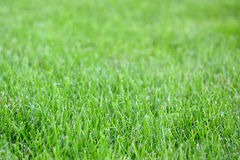 Sunday fresh spring green grass background. Stock Images