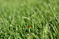 Sunday fresh spring green grass background. Stock Photos