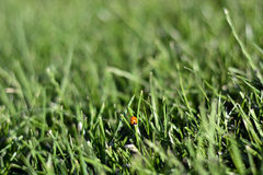 Sunday fresh spring green grass background. Stock Photography