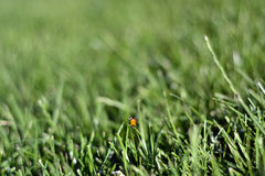 Sunday fresh spring green grass background. Stock Image