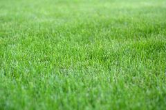 Sunday fresh spring green grass background. Royalty Free Stock Images