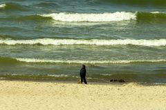 Sunday holiday on the Baltic Sea royalty free stock photo