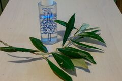 On the Sunday of the plame, an olive branch with holy water is blessed.
