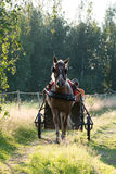 Sunday ride Stock Photography