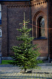 SUNDBY KIRKE  SUNBY CHURCH AND CHRISTMAS TREES Royalty Free Stock Photography