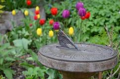 Sundial in tulip garden Stock Photo