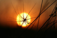 The Sundown. The Herbs on background calling at sun.Silhouettes Stock Images