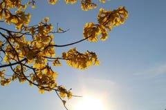 Sundown reflection. Sundown in arbour refletion sunset flowers Stock Photography