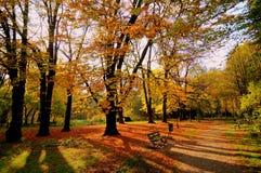 Sundown in the fall. Autumn landscape at sundown over the park stock image
