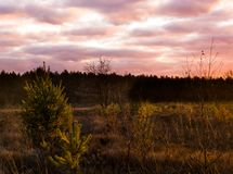 Sundown in a heather landscape with nacreous clouds, a colorful weather phenomenon that rarely occurs in winter stock photography