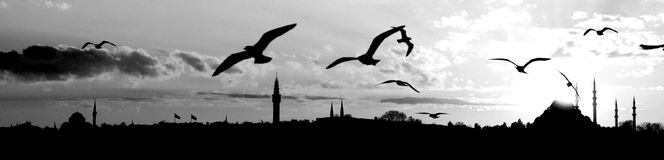 Sundown in Istanbul. Istanbul city skyline with Suleymaniye Mosque. Sunset with sea gulls in istanbul Stock Images