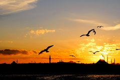 Sundown in Istanbul. Istanbul city skyline with Suleymaniye Mosque. Sunset with sea gulls in istanbul Stock Photo