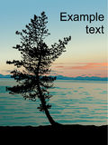 Sundown-on-lake-Baikal. Contour of a pine at a sundown on lake Baikal. The image is executed in graphic editor Illustrator CS2 Stock Image