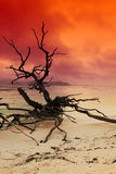 Sundown on ocean. Nature background. Dead tree on ocean coastline Royalty Free Stock Image