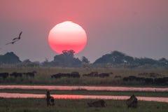 Sundown over the Chobe River stock photo