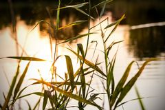 Sundown over a pond Royalty Free Stock Photography