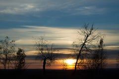Sundown. Prepare for winter trees against the setting sun Stock Photography