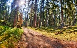 Sundown at the Ryfors Gammelskog Natural Reserve Royalty Free Stock Images
