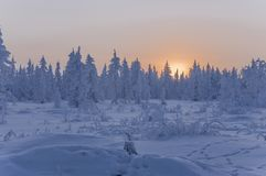 Sundown and sunrises. Winter landscape. Orange sky and silhouettes of trees on the background of heaven. Frosty evening, snow arou Stock Photo