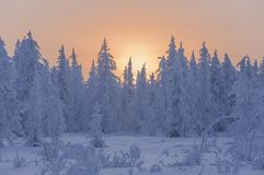 Sundown and sunrises. Winter landscape. Orange sky and silhouettes of trees on the background of heaven. Frosty evening, snow arou Royalty Free Stock Image