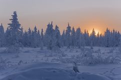 Sundown and sunrises. Winter landscape. Orange sky and silhouettes of trees on the background of heaven. Frosty evening, snow arou Royalty Free Stock Images