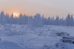 Sundown and sunrises. Winter landscape. Orange sky and silhouettes of trees on the background of heaven. Frosty evening, snow arou Stock Photos