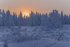 Sundown and sunrises. Winter landscape. Orange sky and silhouettes of trees on the background of heaven. Frosty evening, snow arou Stock Images