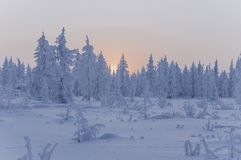 Sundown and sunrises. Winter landscape. Orange sky and silhouettes of trees on the background of heaven. Frosty evening, snow arou Stock Image