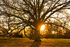 Sundown tree silhouette royalty free stock photos