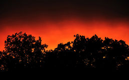 Sunset panorama with trees silhouette Royalty Free Stock Photography