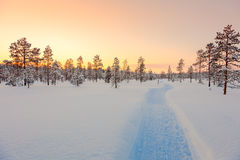 Sundown in winter snowy forest, beautiful landscape Royalty Free Stock Images