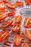 Sundried cherry tomatoes on food dehydrator tray. Shallow dof Stock Photos