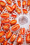 Sundried cherry tomatoes on food dehydrator tray Stock Image