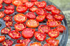 Sundried cherry tomatoes. Sundried red cherry tomatoes on dehydrator tray Royalty Free Stock Photography