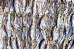 Sundried fish Royalty Free Stock Photos