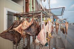 Sundried stingray in a coastal town. royalty free stock photos