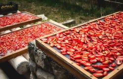 Sundried tomater som torkar i solen arkivbilder