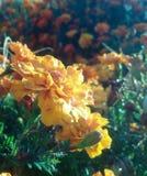 Sundrop утра Стоковое Фото