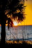Sunest через пальму Стоковая Фотография