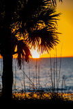 Sunest through palm tree. Sunset on the Gulf Of Mexico beach golden ball with a few clouds over the ocean. sea grass and palm trees in foreground. Blue ocean and Stock Photography