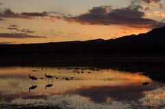 Sunet över Bosque Del Apache New Mexico Arkivfoto