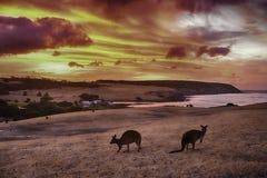 Sunet στο νησί καγκουρό Στοκ Φωτογραφίες