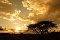 Sunet africano (Kenya) Immagini Stock Libere da Diritti