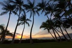 Sunet du sud de Beauitful Maui entre les palmiers photos stock