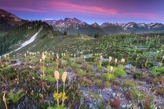 Sunet e flores Imagens de Stock Royalty Free