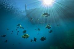 Sunfish and Sunburst - Vortex Springs Royalty Free Stock Images