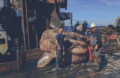 Sunfish Stock Photos