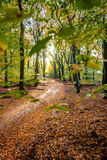 Sunflair on footpath at forest in autumn season, netherlands Royalty Free Stock Photo